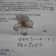 はるかちゃんの桜の花びら